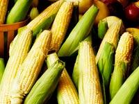 סחורות תירס, דגנים, אוכל, חקלאות / צלם: thinkstock